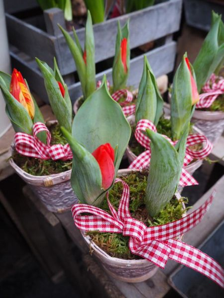 Decoration with two bulptulips